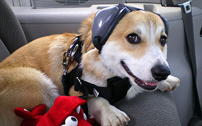 Ear Protection For Your Dog