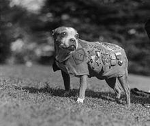 Sergeant Stubby - Purple Heart Reciepient